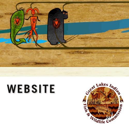 Great Lakes Indian Fish & Wildlife Commision, learn more by clicking here.