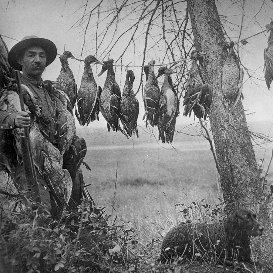 Man holding gun next to a bunch of strung up dead ducks, older black and white photo