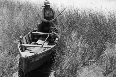 Joe Stoddard of the Chippewa tribe harvesting wild rice on the Bad River Indian Reservation