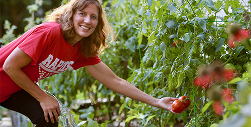 A woman leans over to pick some delicious looking red tomatoes while smiling at the camera.