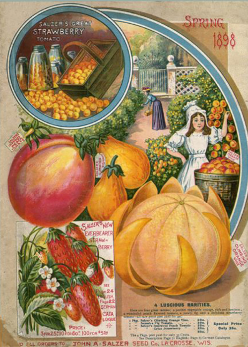 The cover of a seed catalog from 1898.There are a variety of different vegetable featured and a young girl picking fruit is featured wearing an white dress with a woman in the background leaning down to garden.
